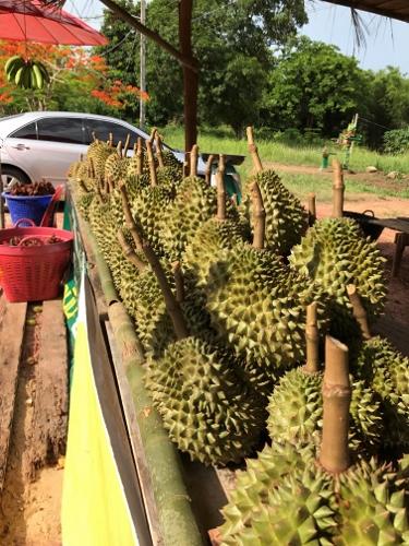 Durian in Chanthaburi, Thailand